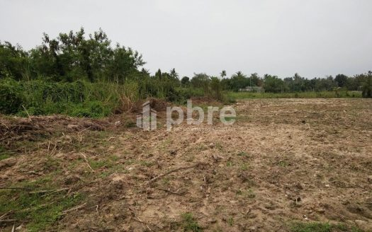 Land For Sale in Pong, Pattaya Bay Real Estate